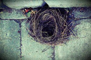 nido senza pulcini